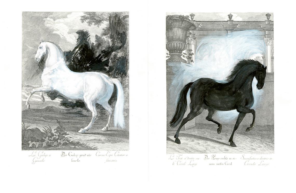 Bild-Equus